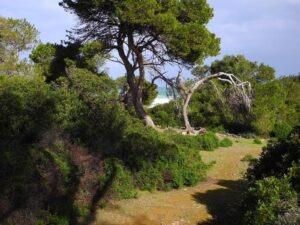 son-real-weg-zur-kueste-wanderwege